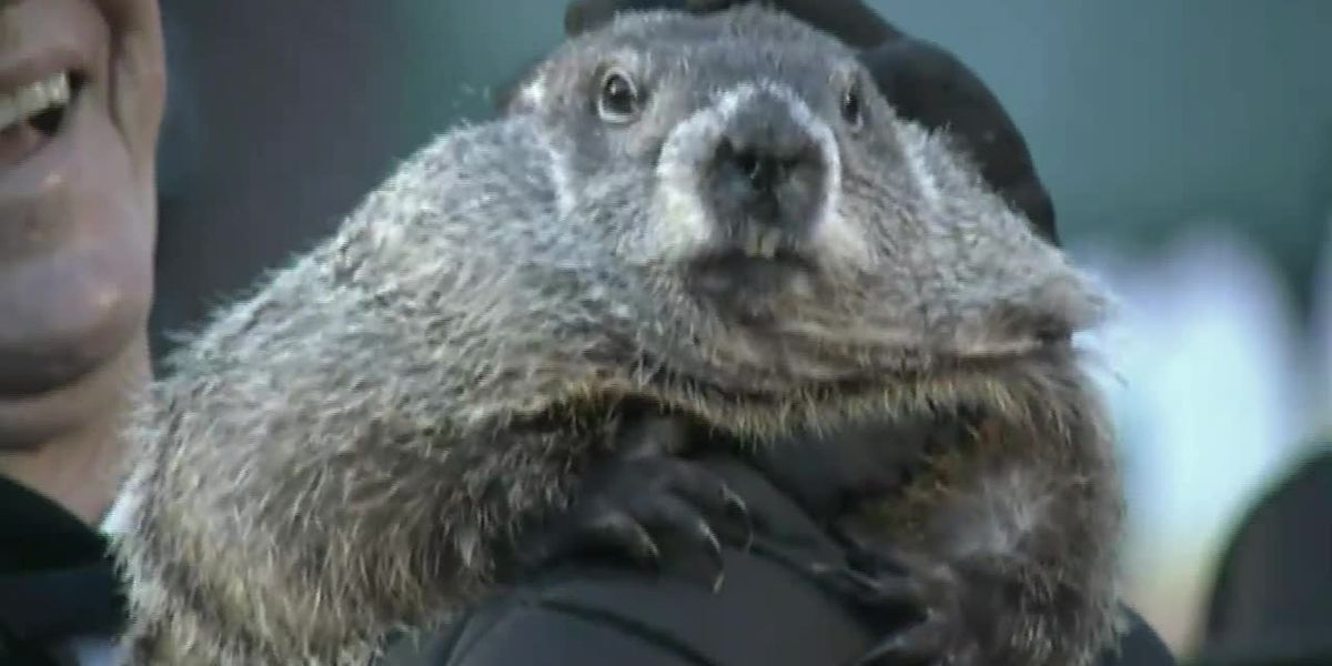Groundhog Day, Punxsutawney Phil to go virtual in 2021