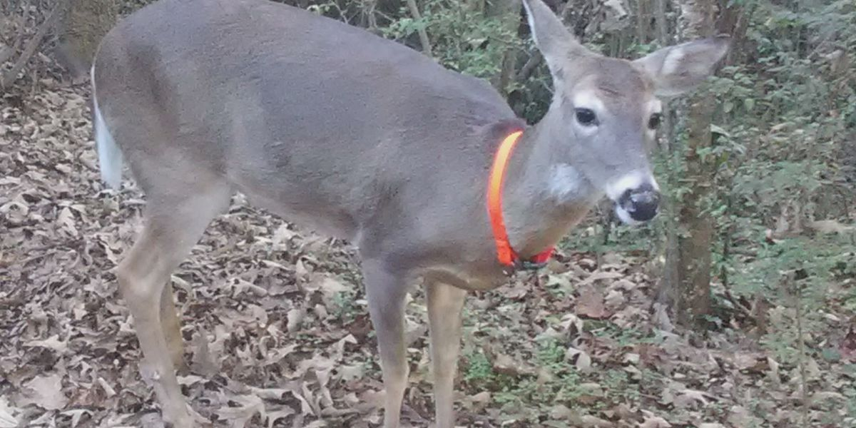 Deer treated as community pet killed in Tuscumbia