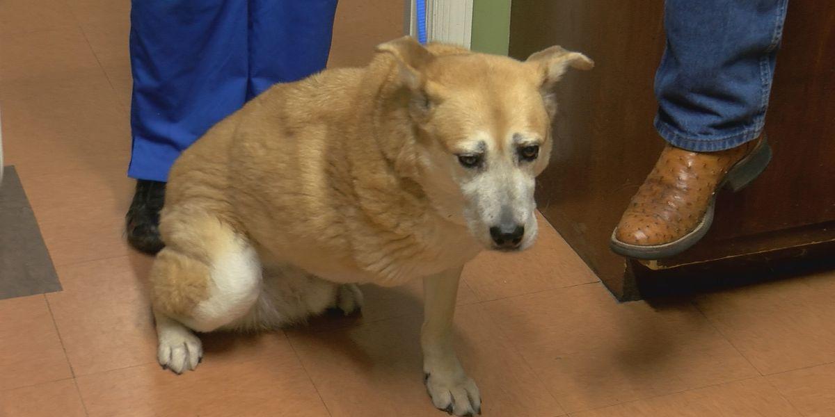 Decatur vet discusses dog fighting, local dumping site