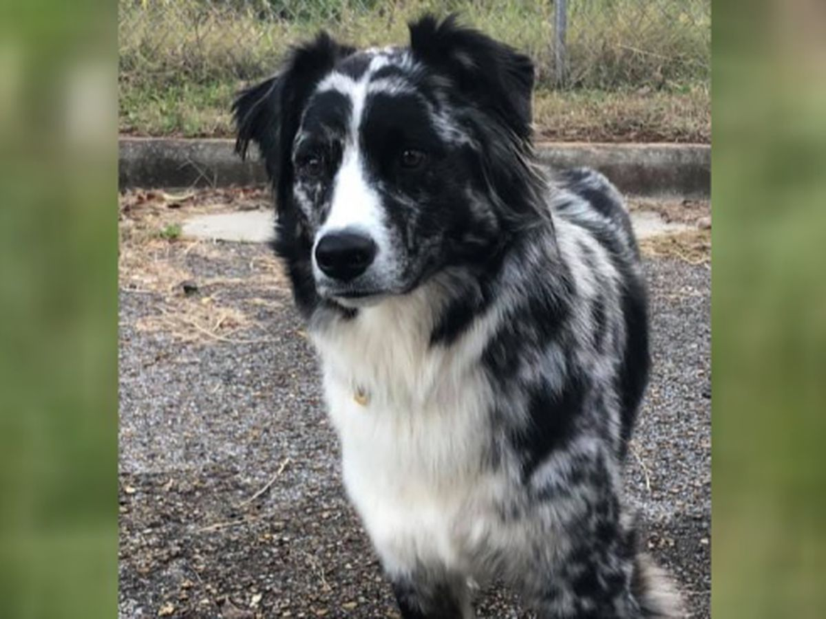 North Alabama couple going to great lengths to find missing dog