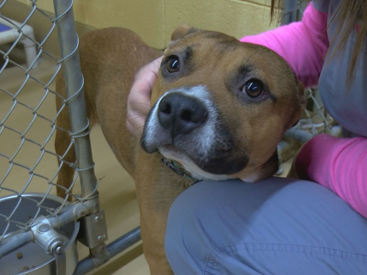 Free adoptions at Huntsville Animal Services this week; discount adoptions in Decatur