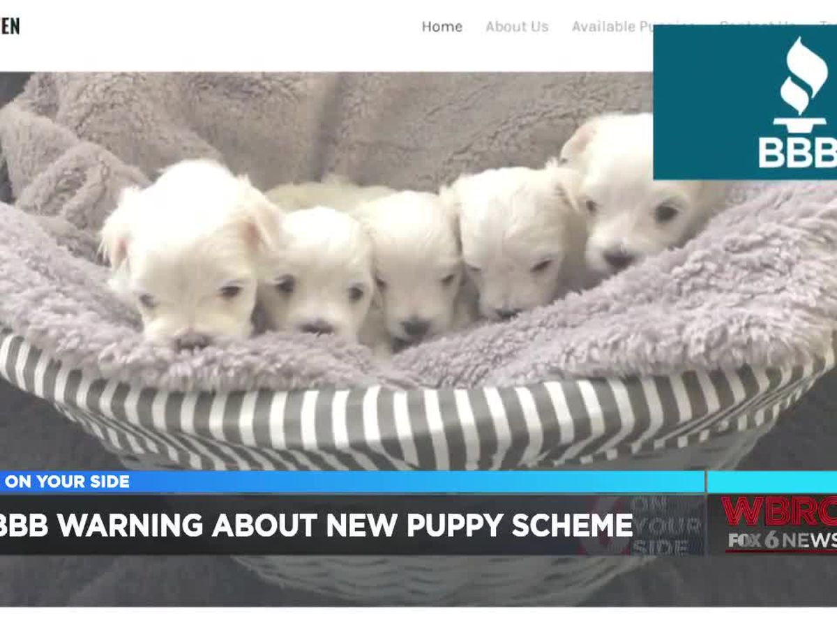 BBB warning people about puppy scams