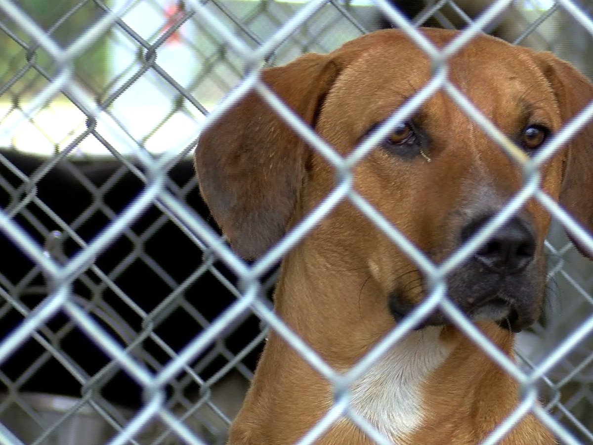 Lawrence County animal shelter says they're not euthanizing dogs