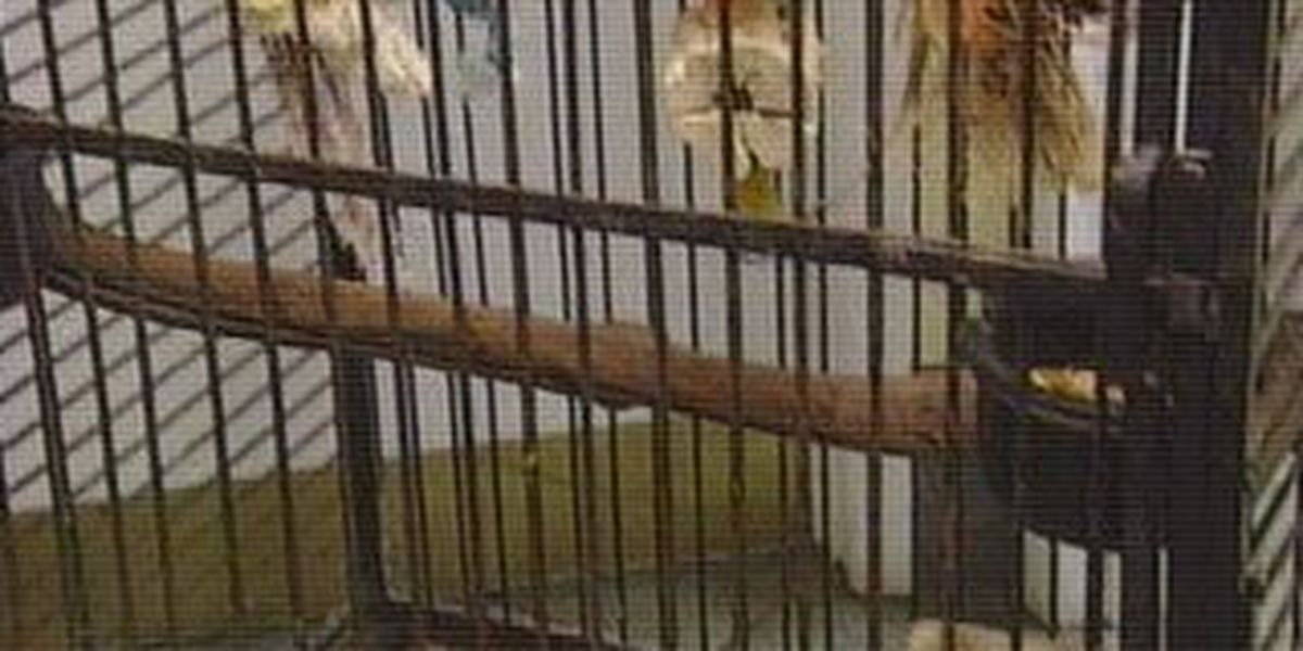 PetSmart stops selling birds
