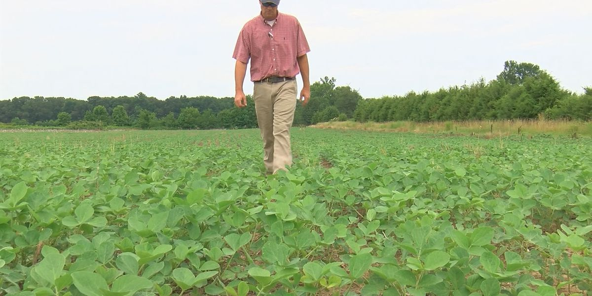 North Alabama farmers weigh in on massive $867B farm bill