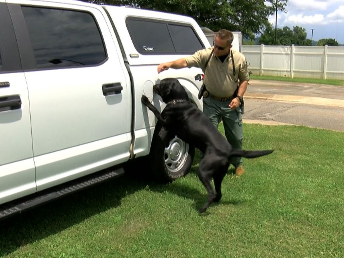 Inside training for HPD's K-9 Unit, prepping for dangerous searches