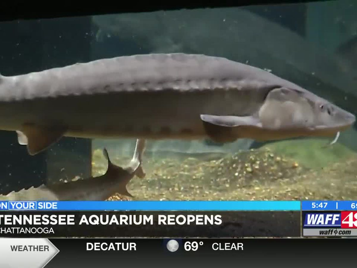 Tennessee Aquarium now back open