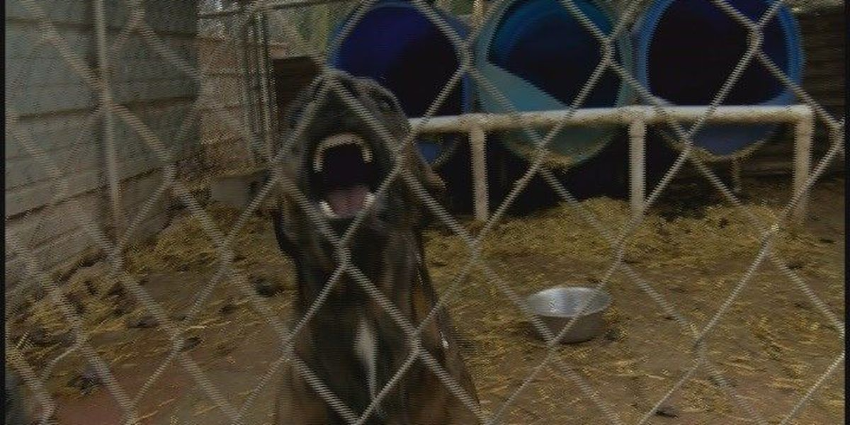 Animal shelter director gives tips on avoiding dog attacks