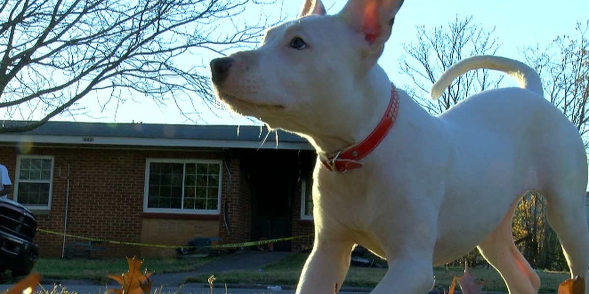 Local 'hero' puppy, owner being forced out of their home