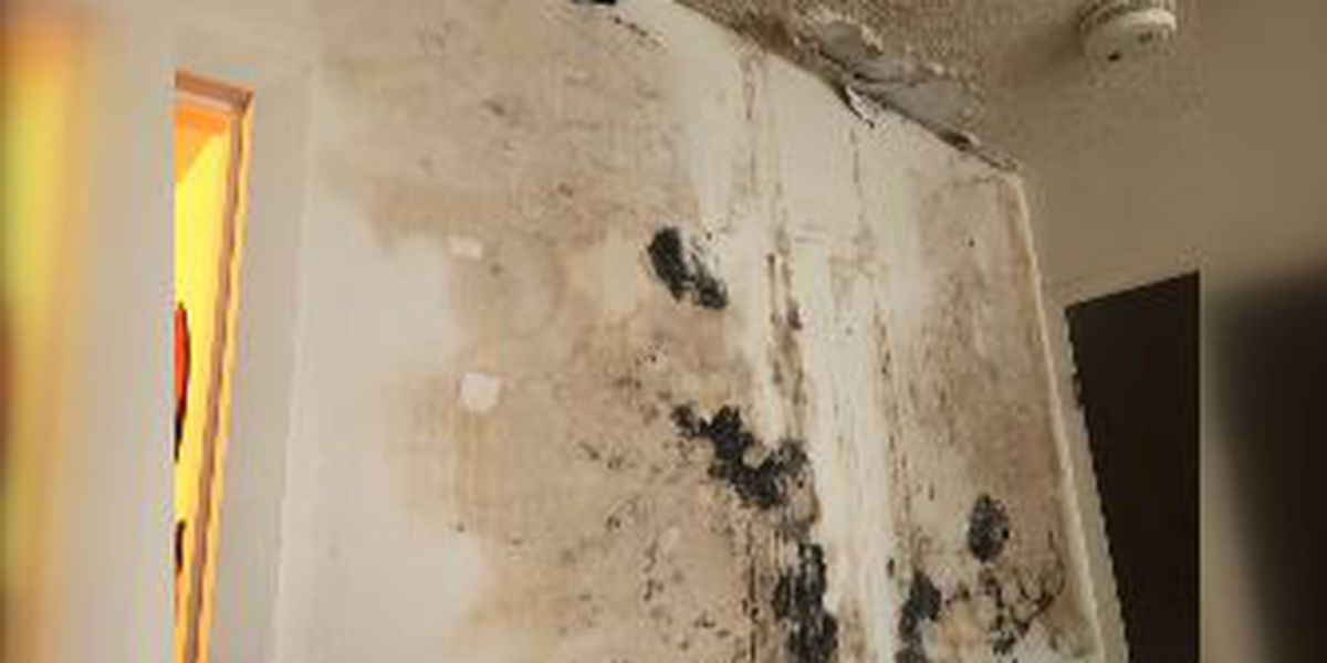 WAFF investigates Huntsville apartment with mold and elevator issues