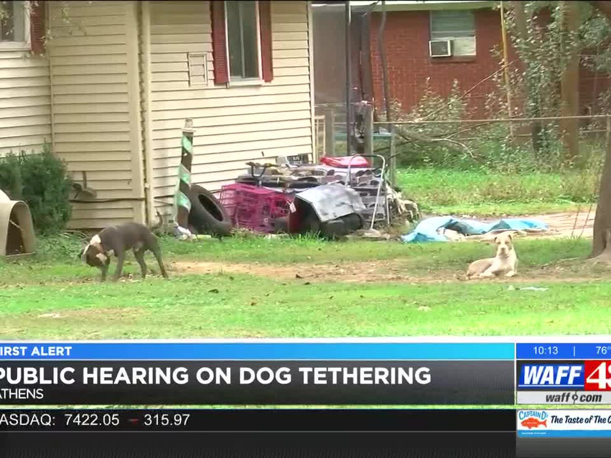 Athens city officials table decision on animal ordinance