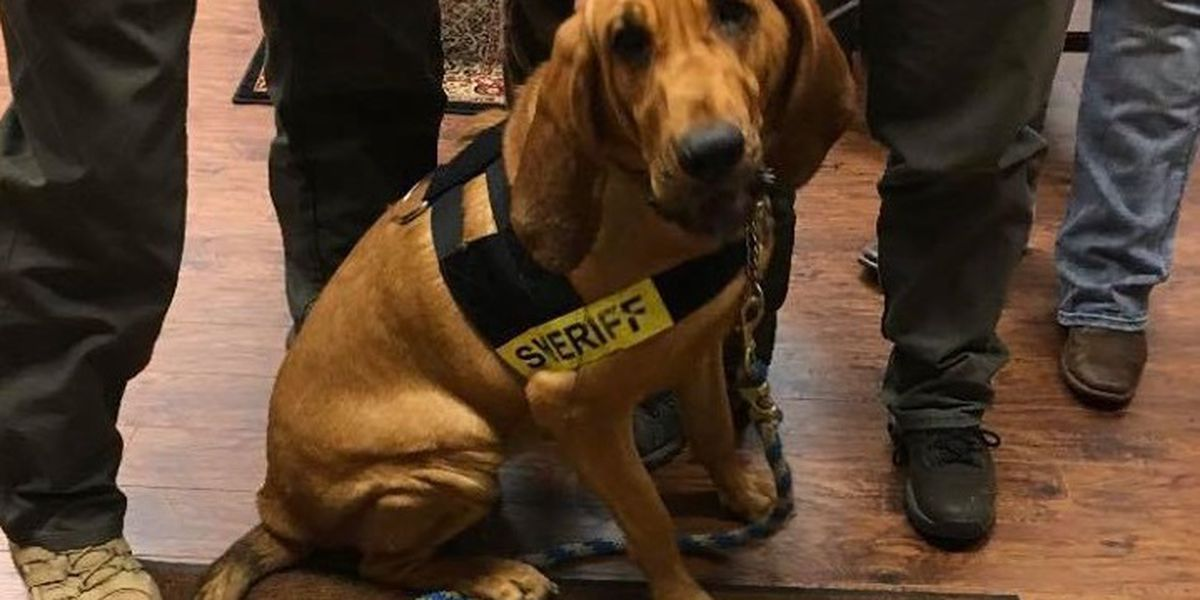 Bloodhound joins Marshall County Sheriff's Office