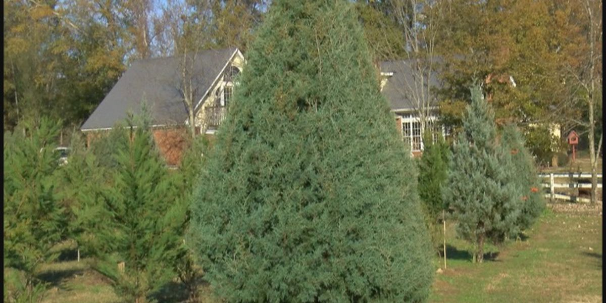 Tips to keep your family safe when having a live Christmas tree