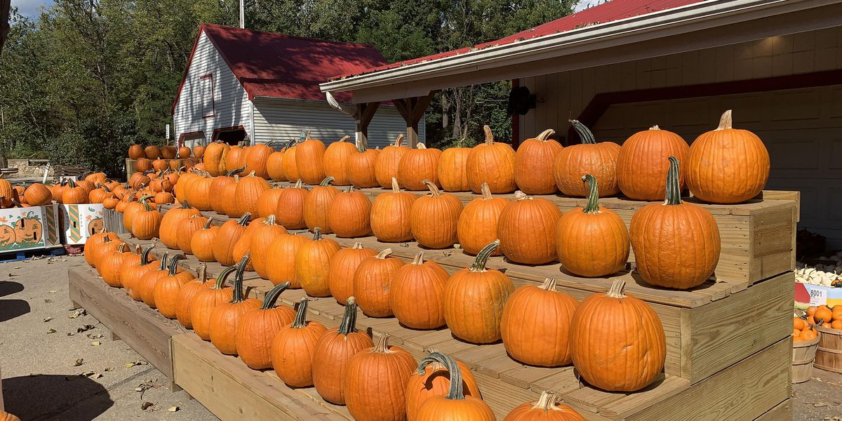 Boaz to celebrate 55th annual harvest festival this weekend