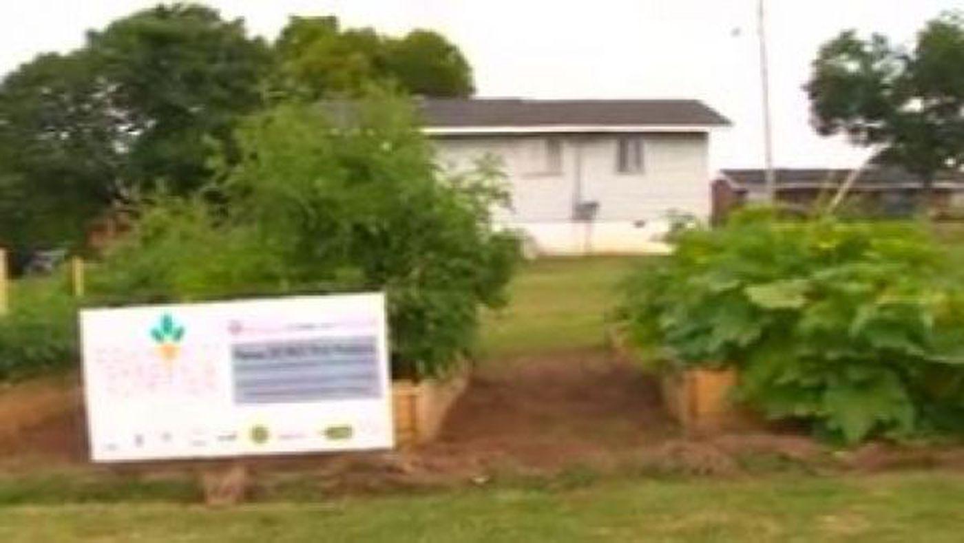 Garden opens at Shoals Community Clinic