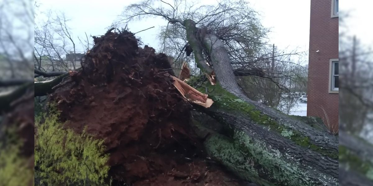Trees, power lines are down in Marshall County following this morning's storm