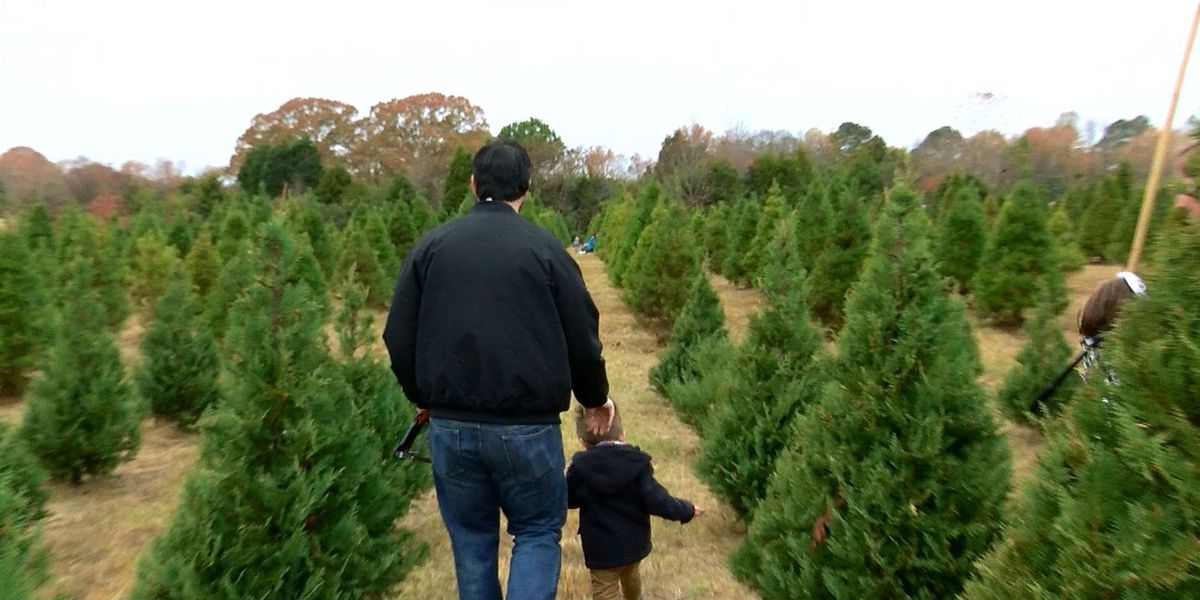 Christmas tree shortages not expected locally