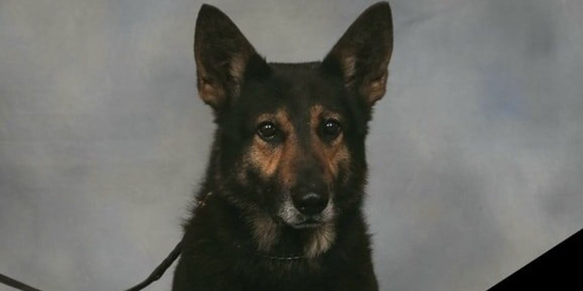 Morgan County Sheriff's Office K-9 passes away