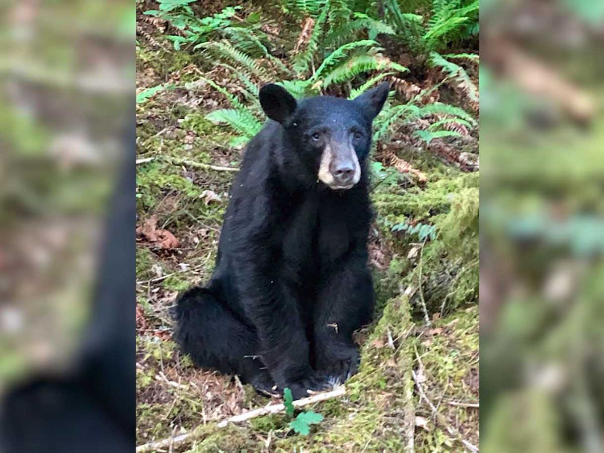 Bear cub fatally shot after it grew too familiar with people who regularly fed it