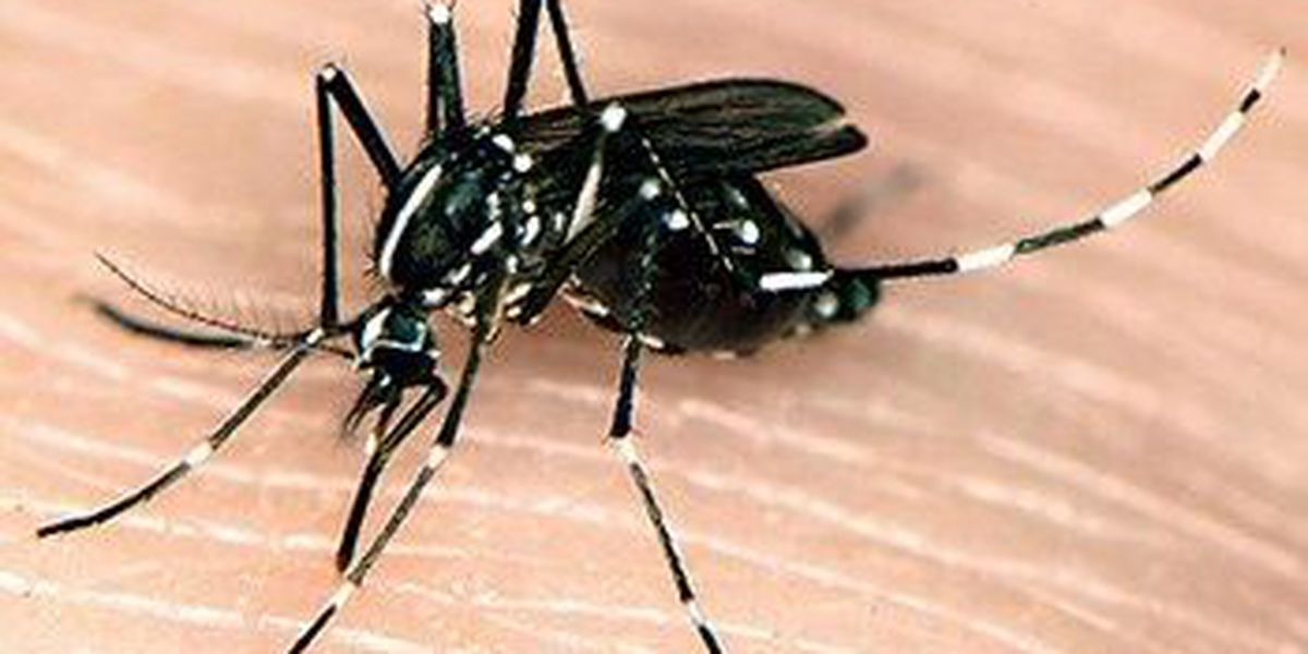See, Click, Fix: Mosquito spraying in Madison Co.