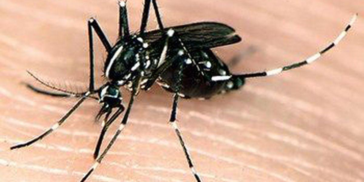 Your Health: Mosquitoes, Zika, eye care, osteoarthritis