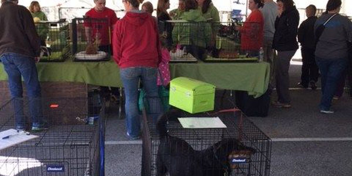 Rescue groups team up for PetSmart adoption event