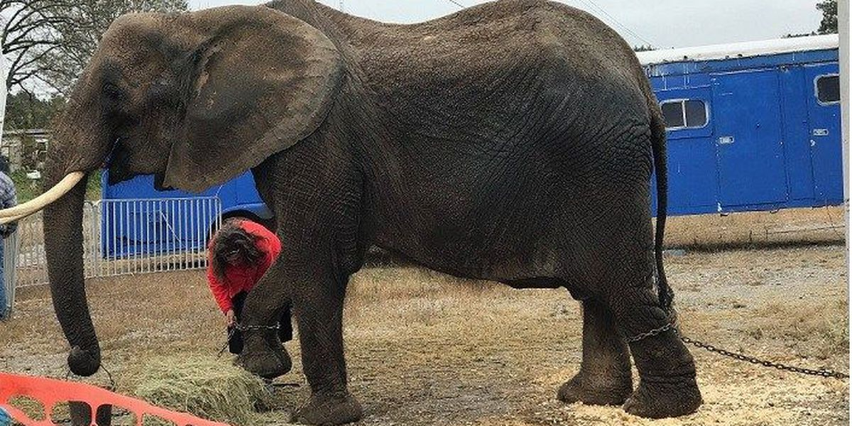 Judge does not allow seized circus elephant to return to owner